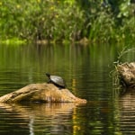Learn about the paradise called Yasuni National Park