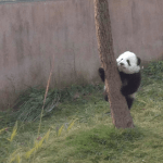 What should I do in Chengdu