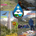 BIRDWATCHING IN CORDILLERA BLANCA - THE PERUVIAN ANDES