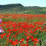 The Joys of the Serrania de Ronda