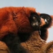 The natural marvels of mesmerizing Madagascar!