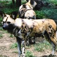 Kruger National Park, Mpumalanga
