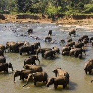 Going to Sri Lanka? Pointers to help plan a great holiday!