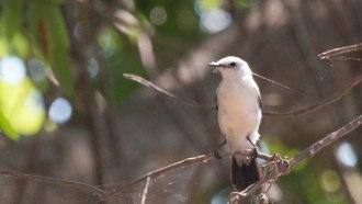 pantanal-sightseeing