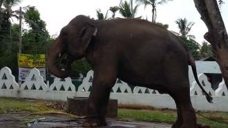 polonnaruwa-sightseeing