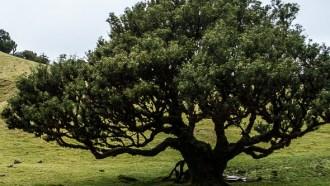 madeiraisland-sightseeing