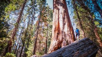 sequoianationalpark-sightseeing
