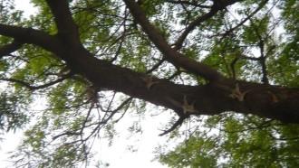 newdelhi-sightseeing