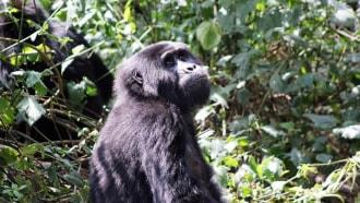 kampala-sightseeing
