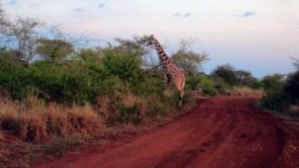 nairobi-sightseeing