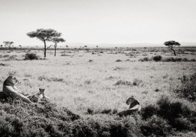 The different types of African Safari you can enjoy!