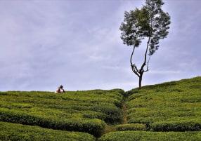 Ten Reasons to Spend More Time in and around Nuwara Eliya