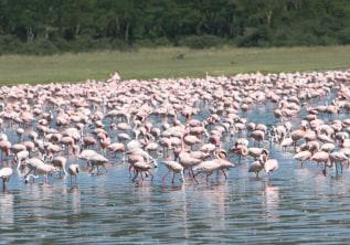 Travel Tips for Kenya Safaris