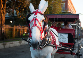 Why Mules over Horses?
