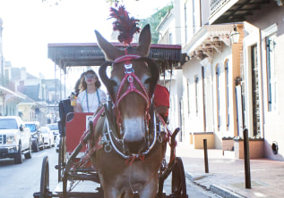 5 Reasons Why A Carriage Tour is the Best Way to Discover New Orleans