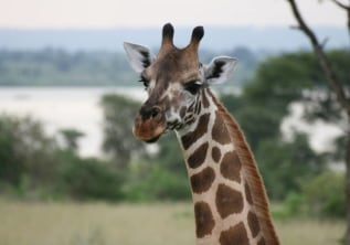 LOOKING FOR BEST ECO-TOURISM ACTIVITIES IN UGANDA
