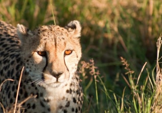 10 Best Ways to Experience the Wild Charm of Kenya