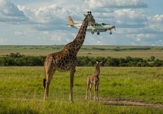 6 Best Safari Destinations for 2021/2022