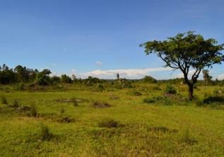 THE CREATIVITY OF ECO TOURISM IN UGANDA