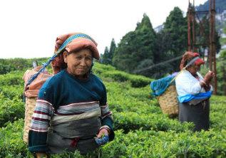 Darjeeling and Gangtok – Toy Trains, Tsomgo Lake and Tea Plantations
