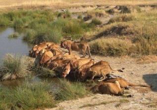 Kenya Adventure Safaris