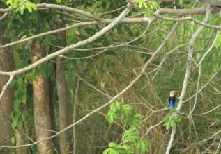 HIDDEN TREASURES OF THE BIGGEST FOREST OF UGANDA