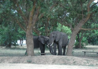 TRAITS ABOUT FOREST ELEPHANTS