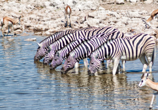 8 Natural Wonders to Discover in Namibia