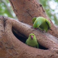 Birding in Keoladeo National Park