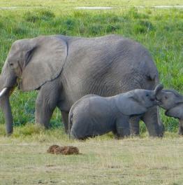 Pass an eye over this South Kenyan Park