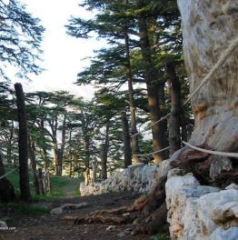9-Hour Gibran Museum, Cedars Of God Bsharri & Aarbet Qozhaiya Monastery Tour