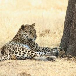 3 Days Masai Mara National Reserve Budget Safari
