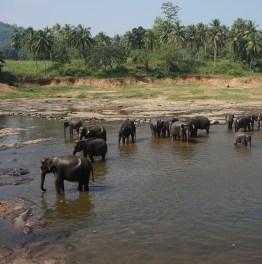 Go for Cultural, Wildlife and Coastal Explorations