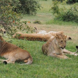 Head for a heartracing Wildebeest safari