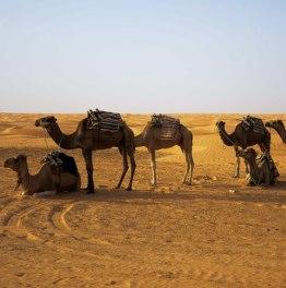 2-Day Tunisian Desert Tour from Djerba