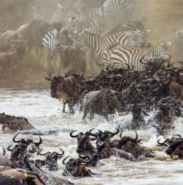 4-Days Wildebeest Migration Safari from Nairobi to Masaai Mara