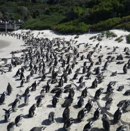 Drive down the scenic Cape Peninsula