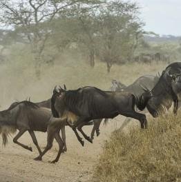 Take Joy in this African Deluxe Safari