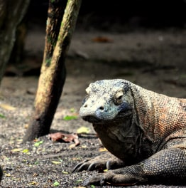 A Perfect Holiday in Komodo National Park