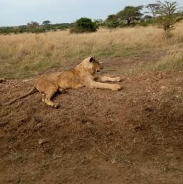 Participate in this Kenyan Wildlife Adventure