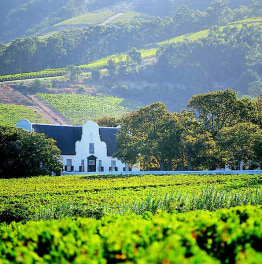 8-Hour Wine Tour Of Franschoek From Cape Town