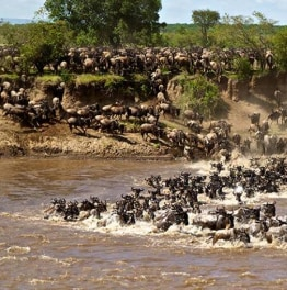 View African wildlife in their natural habitats