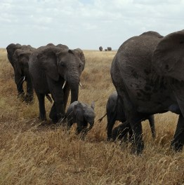 Track the big-five and visit Kenya