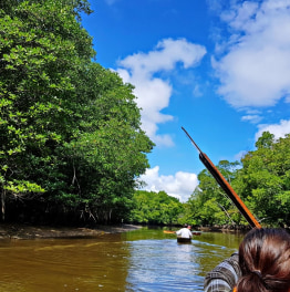 Canoe in Mangrove Forests through the Limpaki Wetlands
