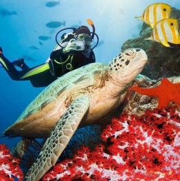 Snorkel in Sri Lanka on this 6 Day Tour