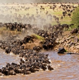 The Astounding Masai Mara Safari