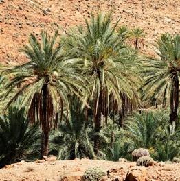3-Hour Desert Camel Tour in Marrakech