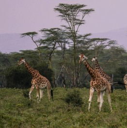 Book this Migration Safari Package