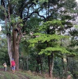 Full day Palaung & Shan Villages trek