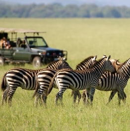 Take a Budget Safari to the Mara
